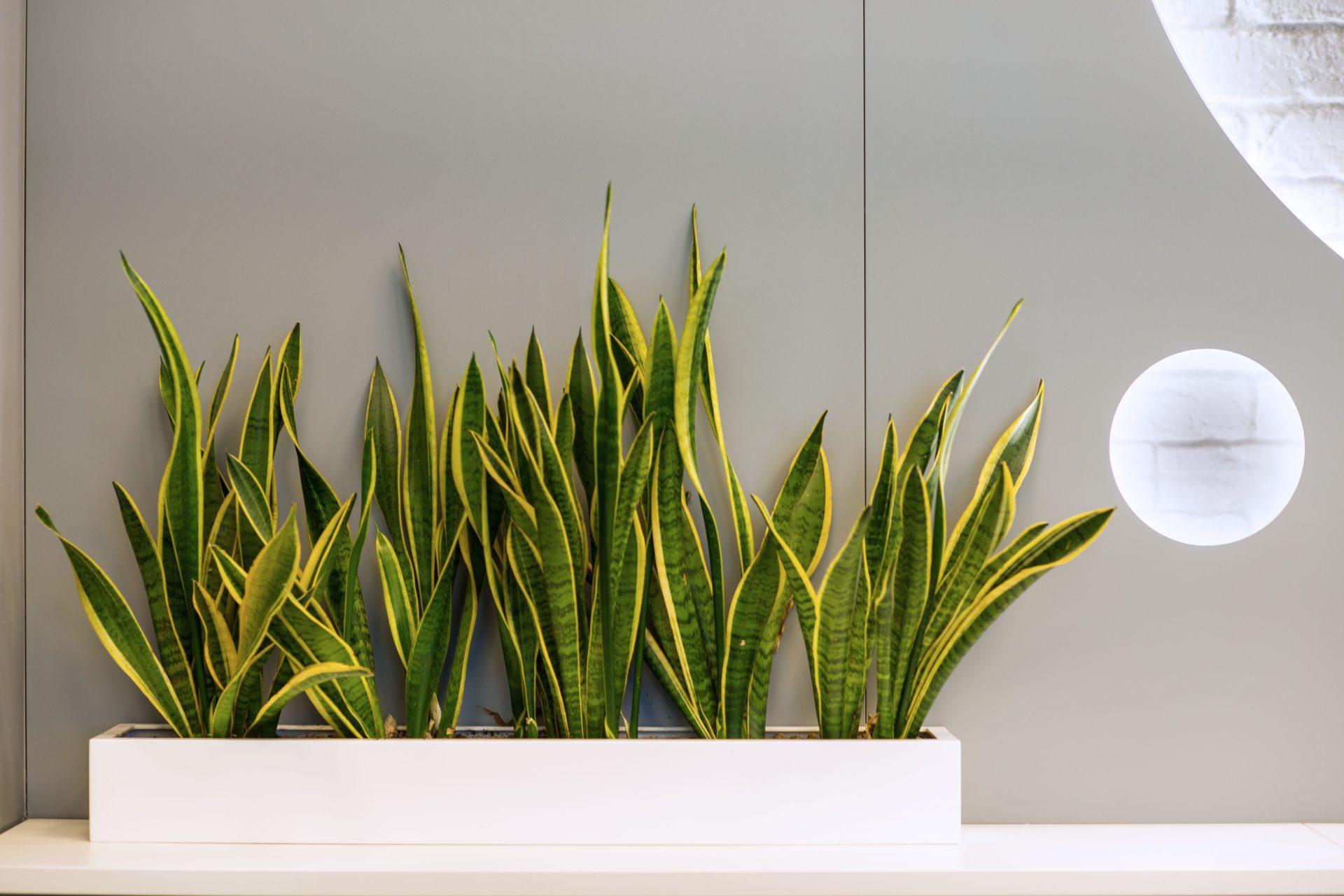 Фото интерьера банка Зенит. Озеленение